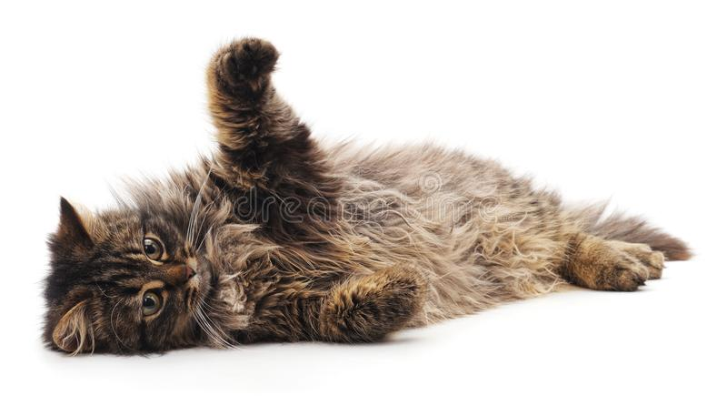 Gato marrom bonito fotos de stock royalty free