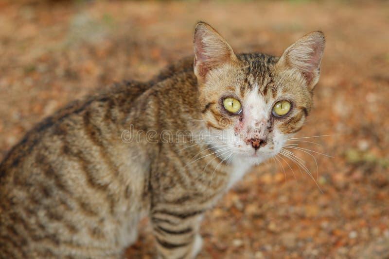 Gato masculino perdido sucio imagen de archivo libre de regalías