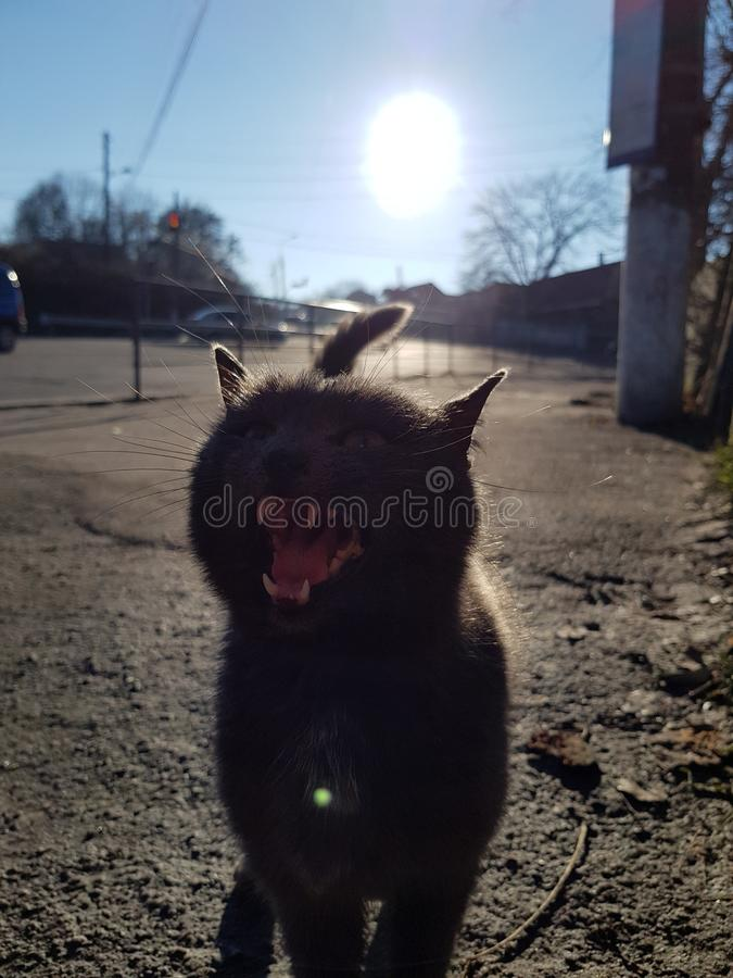 Gato Meowing imagen de archivo