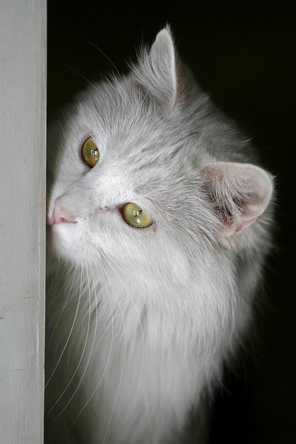 Gato mientras que reflexiona. imágenes de archivo libres de regalías