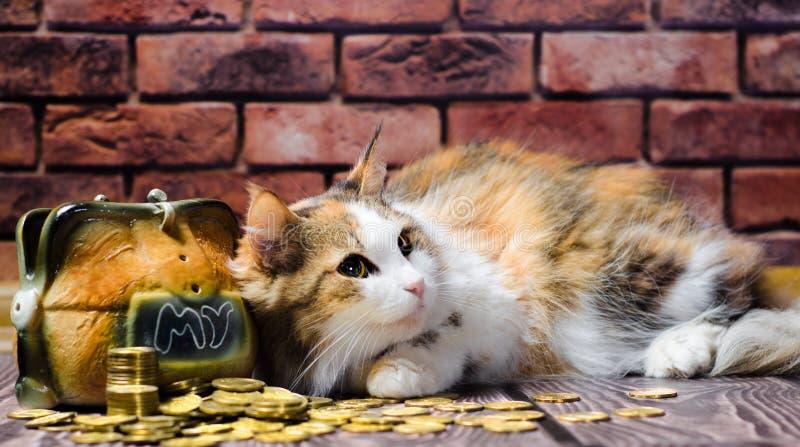 Gato mullido abigarrado de la avaricia que guarda una montaña de monedas y de la hucha imagenes de archivo