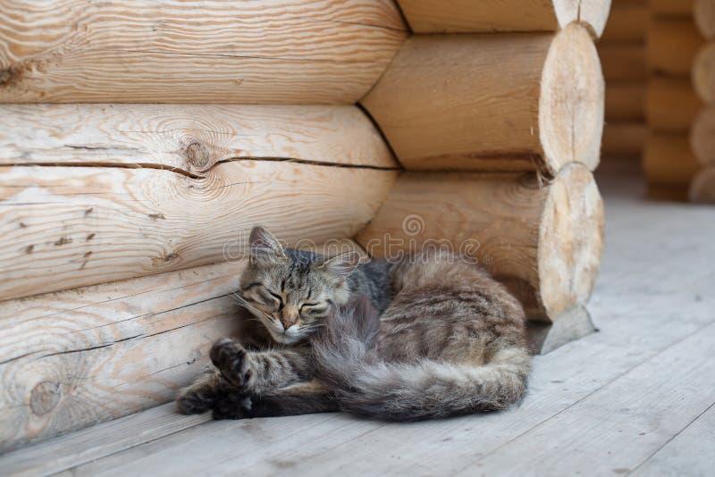 Gato mullido que miente en el pórtico de una casa del pueblo de una cabaña de madera foto de archivo