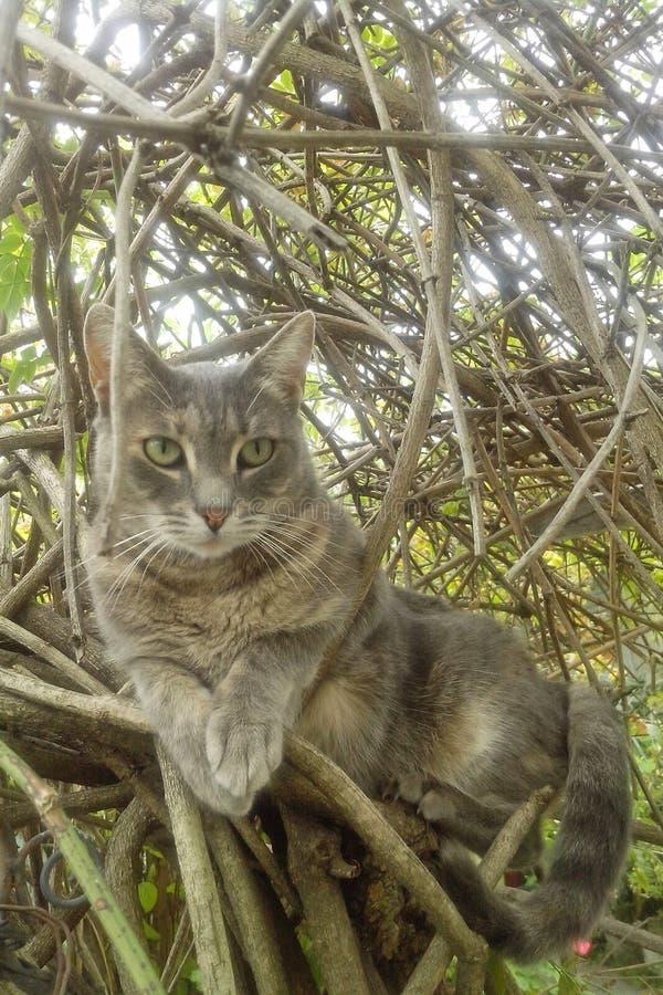 Gato na árvore imagens de stock