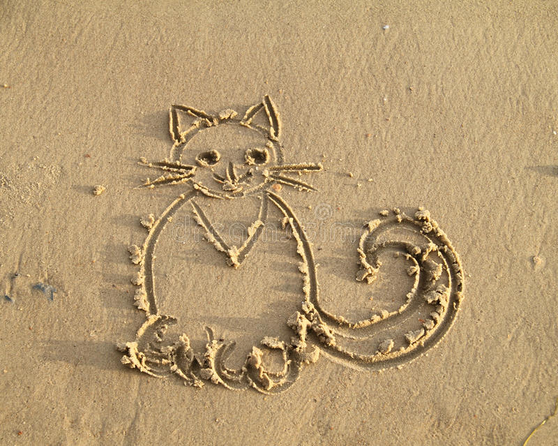 Gato na areia molhada foto de stock