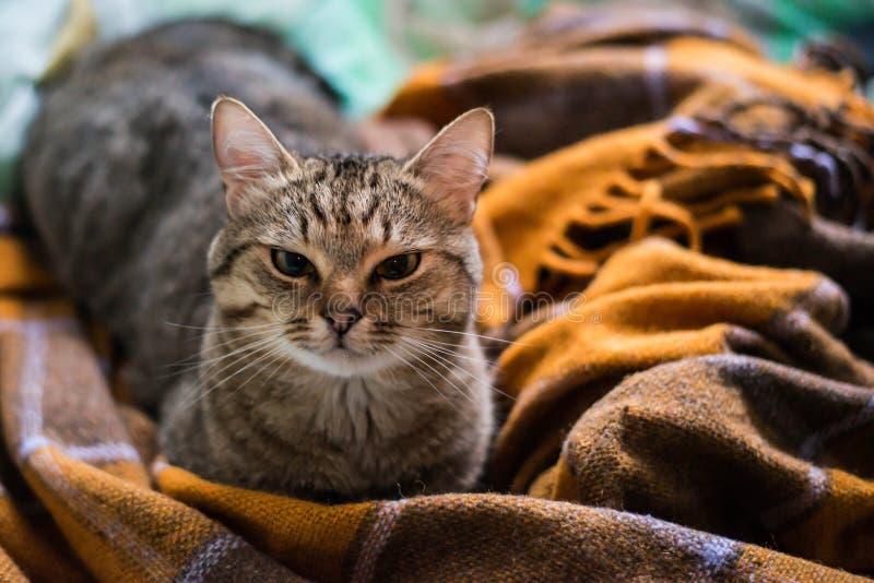 Gato na cama fotos de stock