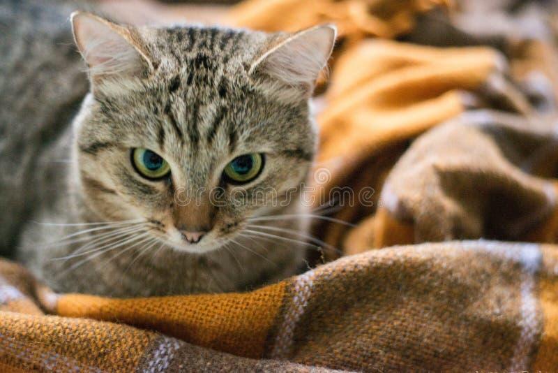 Gato na cama foto de stock