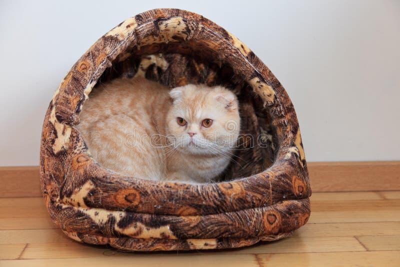 Gato na casa fotografia de stock
