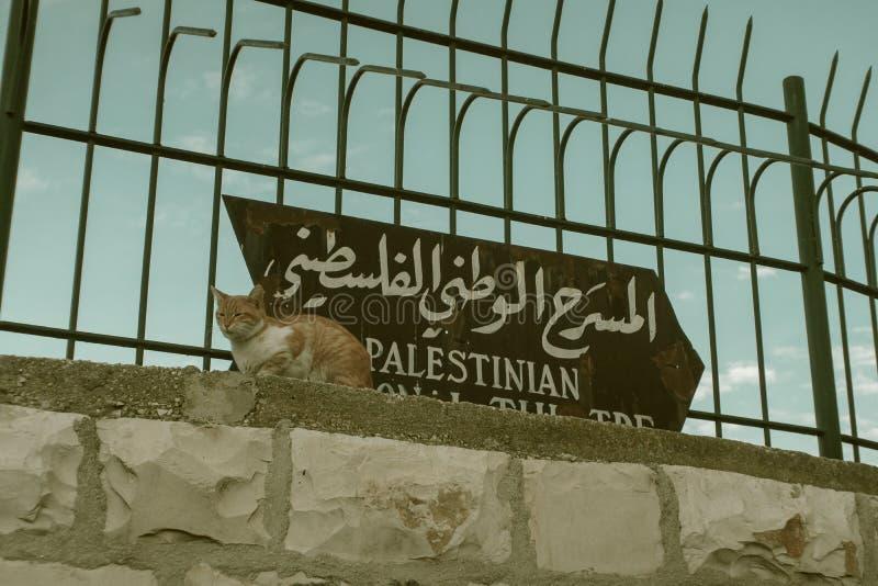 Gato na cidade velha no Jerusalém imagem de stock