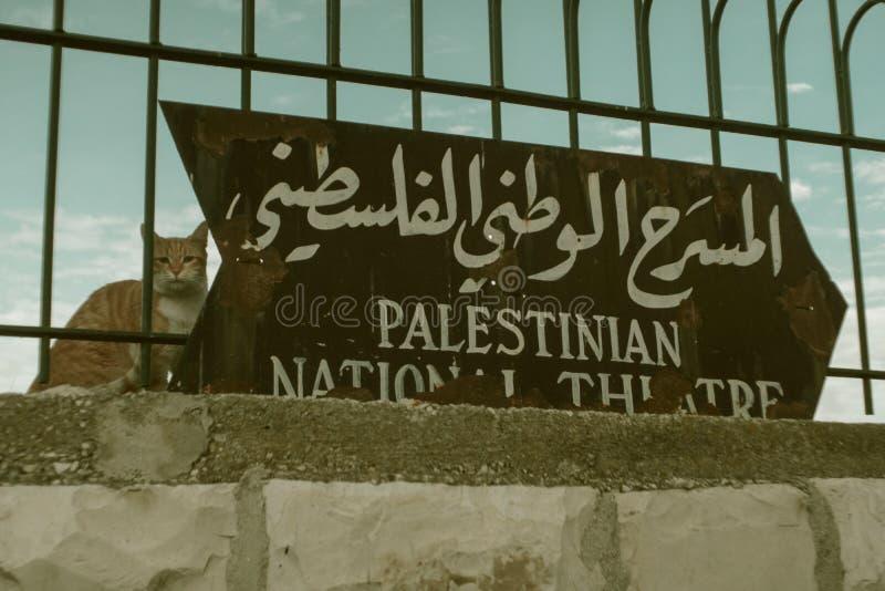 Gato na cidade velha no Jerusalém Palavra em meios do hebraico - teatro nacional palestino imagens de stock royalty free