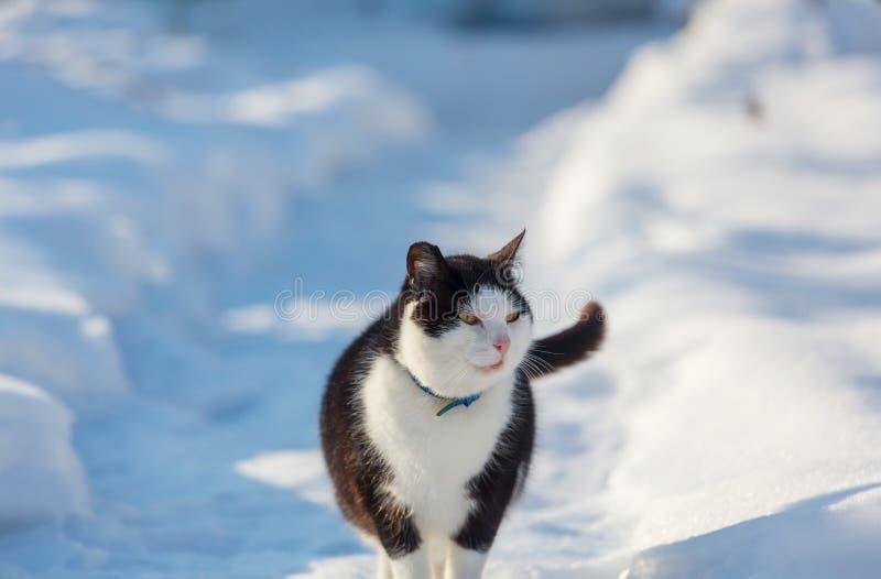 Gato na estação do inverno imagem de stock