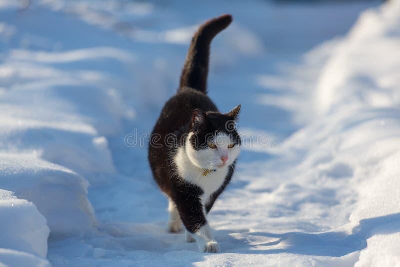 Gato na estação do inverno imagem de stock royalty free