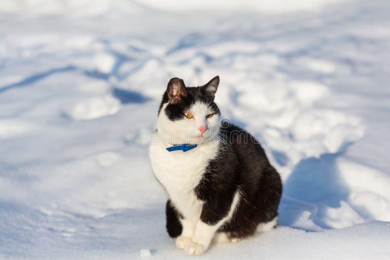 Gato na estação do inverno imagens de stock
