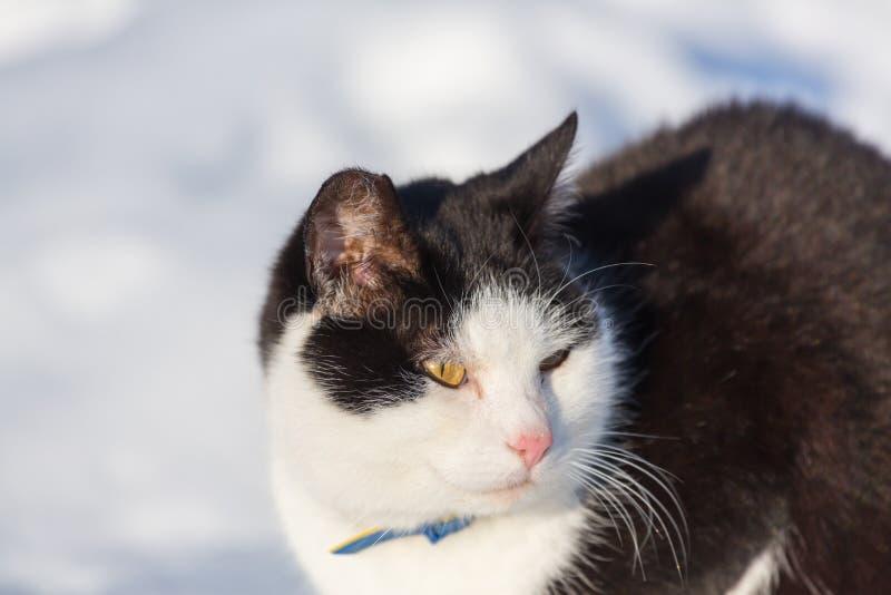 Gato na estação do inverno fotografia de stock