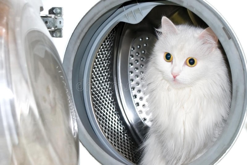Gato na máquina de lavar. fotos de stock royalty free
