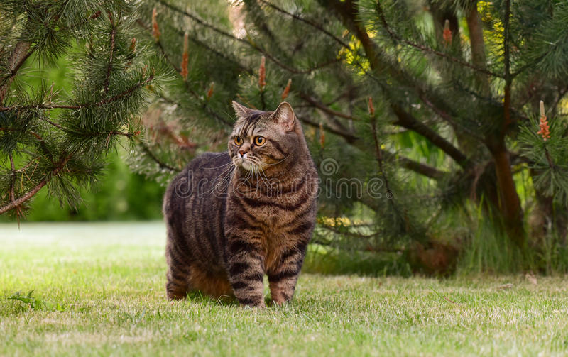 Gato na natureza foto de stock royalty free