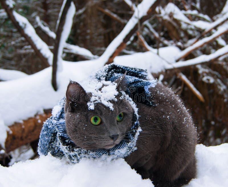 Gato na neve imagem de stock