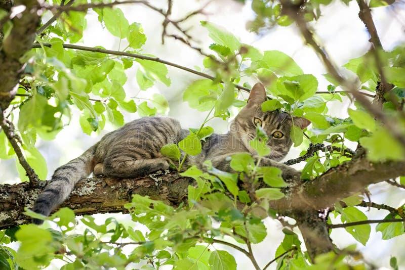Gato na opinião do close up da árvore fotografia de stock