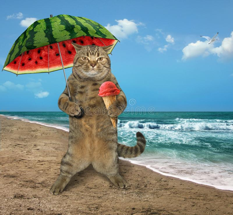Gato na praia 7 fotografia de stock