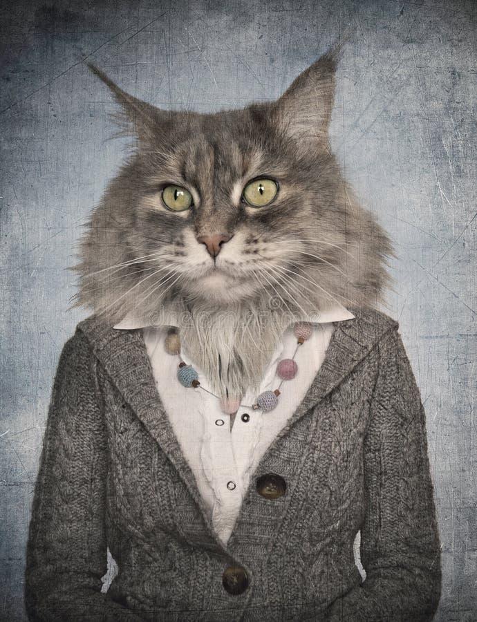 Gato na roupa Gráfico do conceito no estilo do vintage foto de stock