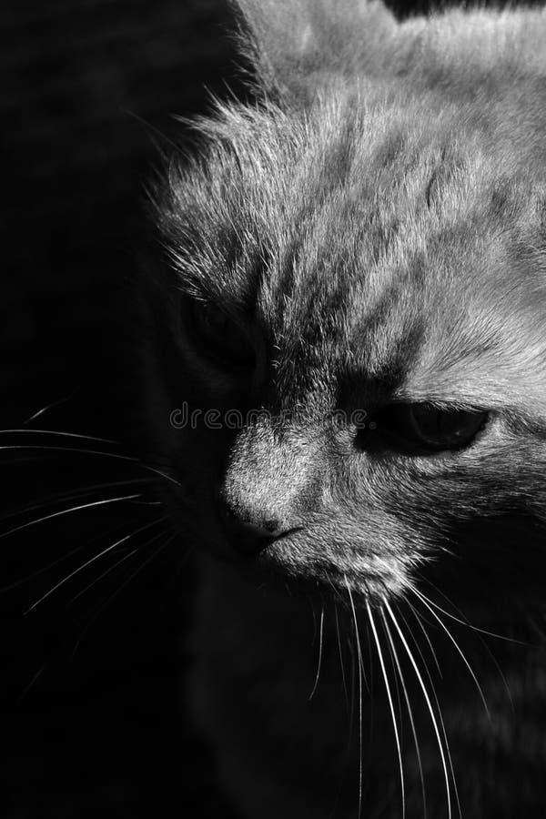 Gato na sombra e na luz imagem de stock royalty free