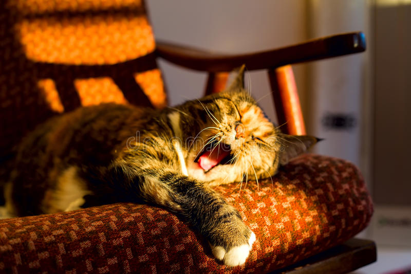 Gato nacional lindo que miente en el sofá y que bosteza fotografía de archivo libre de regalías