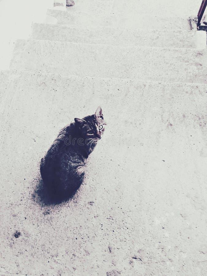 Gato nas escadas fotografia de stock royalty free
