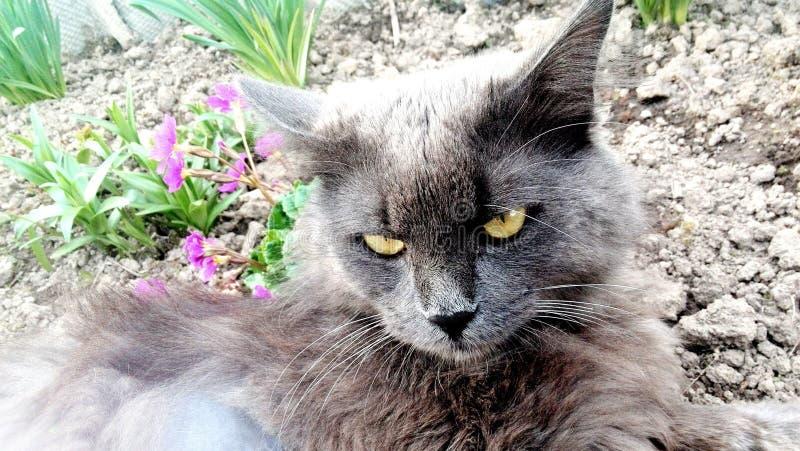 Gato nas flores, mola, gato cinzento, gatinho foto de stock