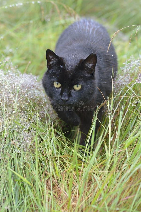 Download Gato negro imagen de archivo. Imagen de piel, hierba - 42436913