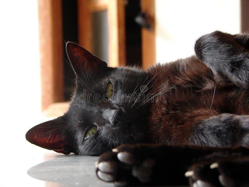 Gato negro imagenes de archivo