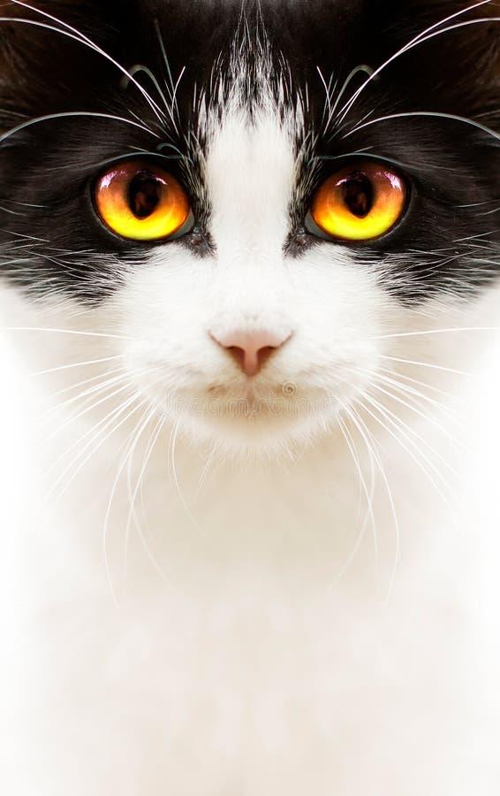 Gato negro blanco fotos de archivo libres de regalías