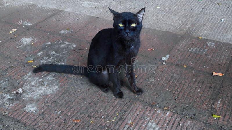 Gato negro con los ojos amarillos imagen de archivo