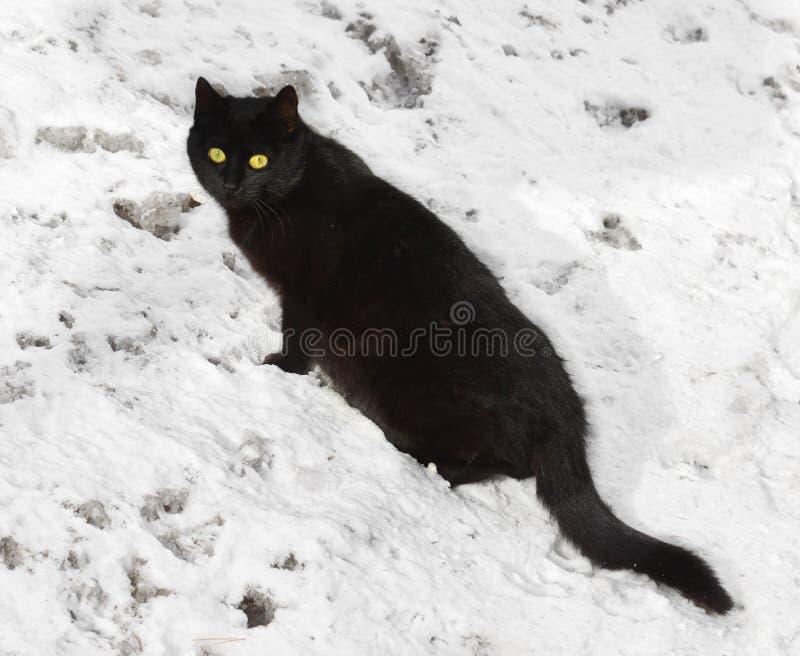 Gato negro con los ojos amarillos en nieve fotografía de archivo