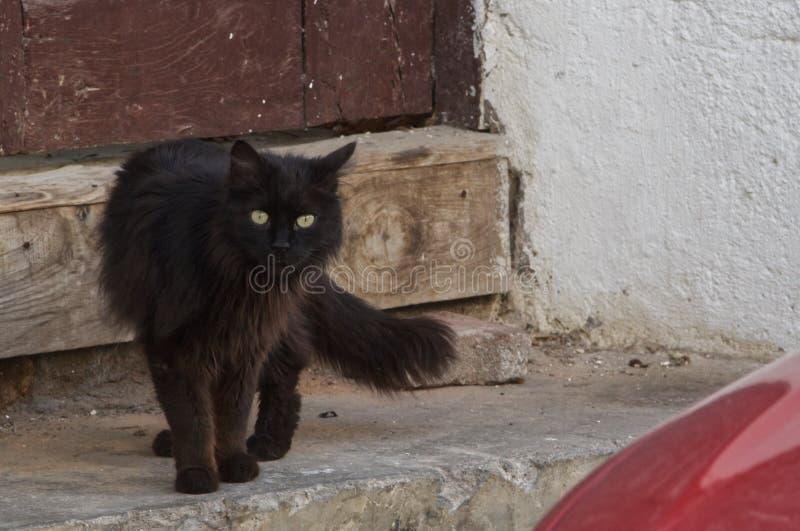 Gato negro de la calle imagen de archivo