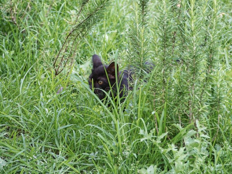 Gato negro de la calle fotos de archivo libres de regalías
