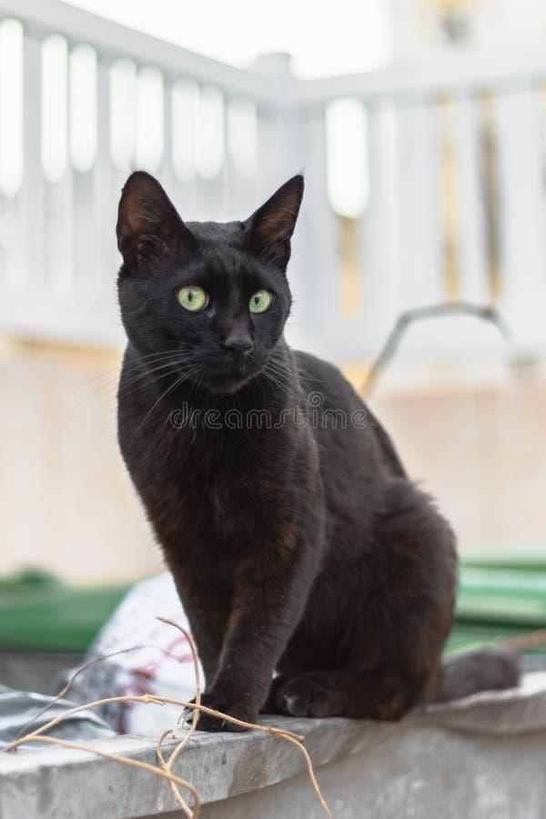 Gato negro de la calle que se sienta en un bote de basura Tiro vertical imagen de archivo libre de regalías