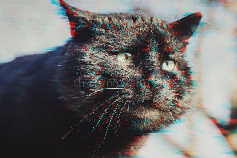 Gato negro del bozal en efecto de la interferencia fotos de archivo
