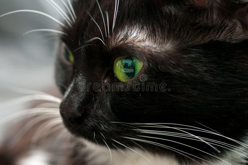 Gato negro del bozal en perfil fotografía de archivo libre de regalías