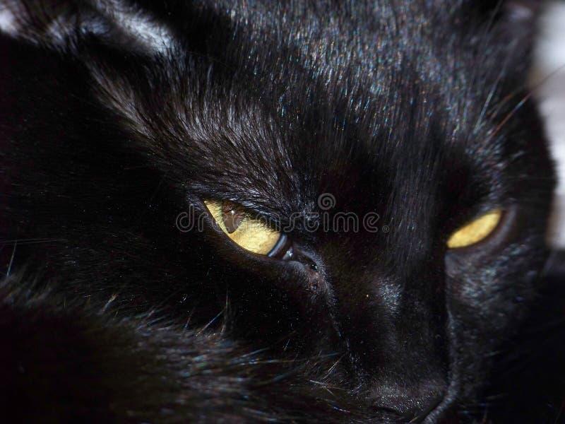 Gato negro disturbado fotografía de archivo libre de regalías