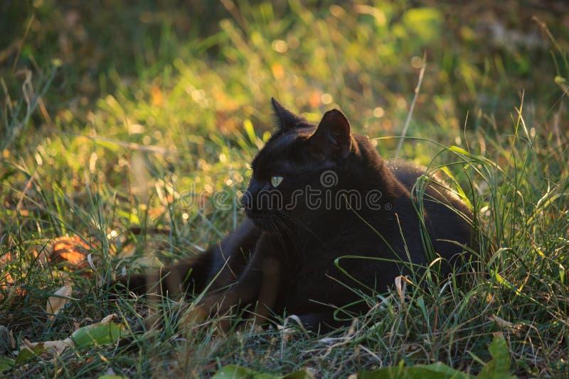Gato negro en el jardín fotografía de archivo