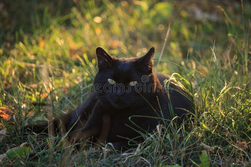 Gato negro en el jardín imagen de archivo