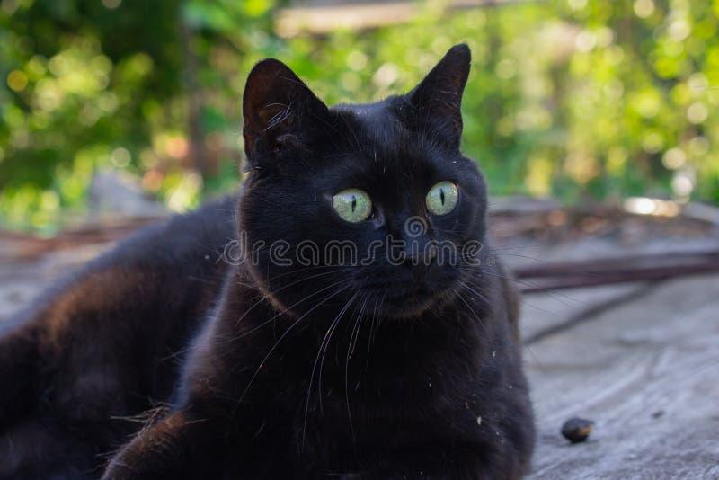Gato negro en el jardín imagenes de archivo