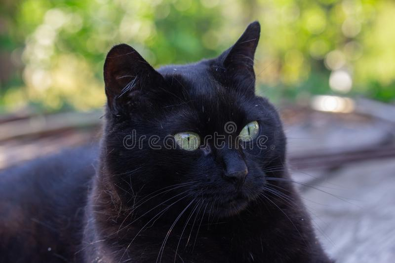 Gato negro en el jardín fotografía de archivo libre de regalías