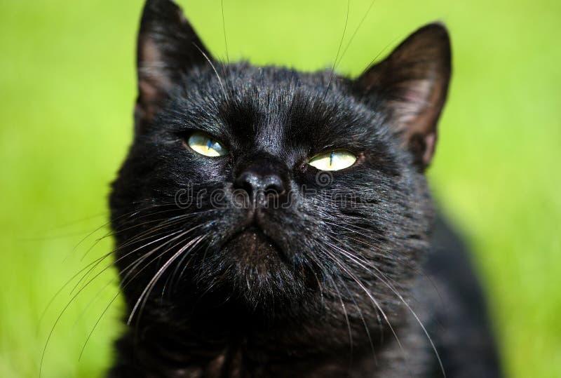 gato negro en fondo verde imagen de archivo libre de regalías