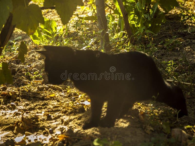 Gato negro en la naturaleza 2 foto de archivo