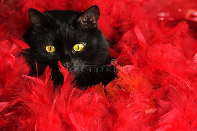 Gato negro en plumas rojas fotos de archivo
