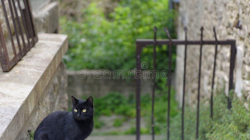 Gato negro en Provence fotos de archivo
