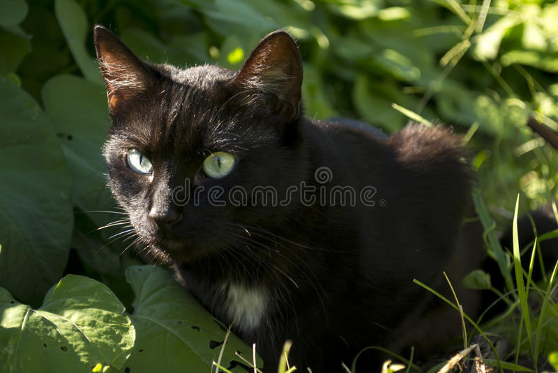 Gato negro en Sunny Garden foto de archivo libre de regalías