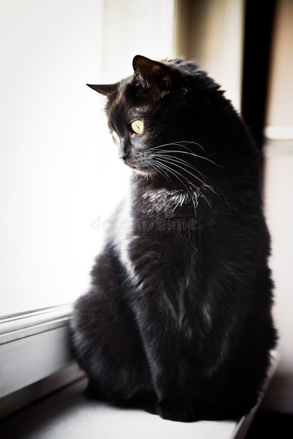 Gato negro en un windowsill imagenes de archivo