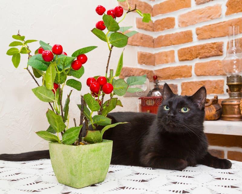 Gato negro, flores decorativas fotografía de archivo libre de regalías
