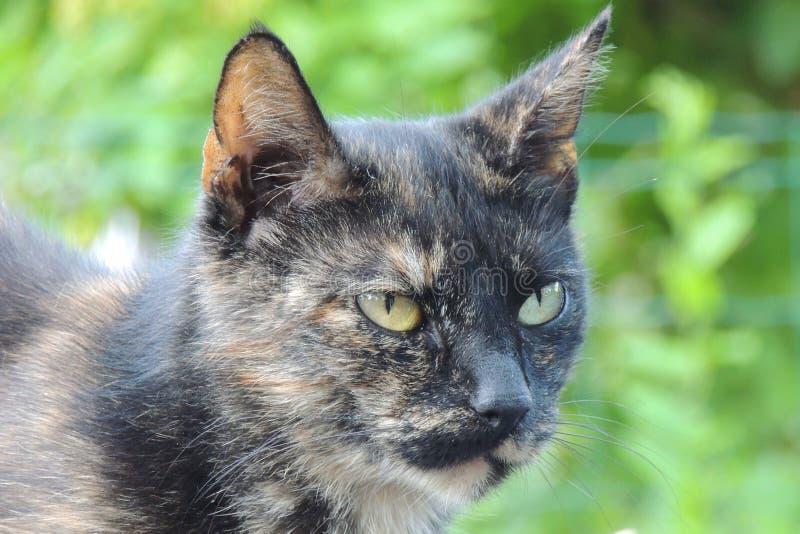 gato Negro-gris imágenes de archivo libres de regalías